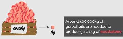 grapefruit; nootkatone